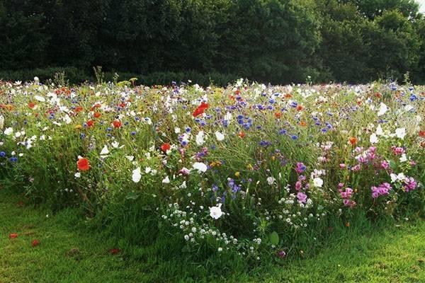 Влаголюбивые растения, кустарники, деревья для сада