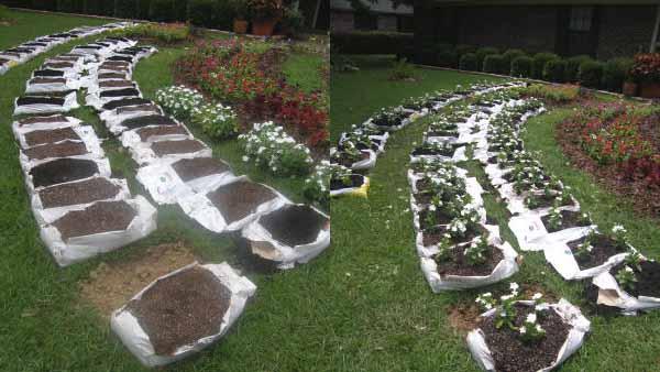 Огород без хлопот рф. органическое земледелие – сад и огород без хлопот для разумно-ленивых