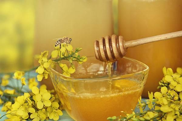 Рапсовый мед: польза и вред, влияние на разные системы организма