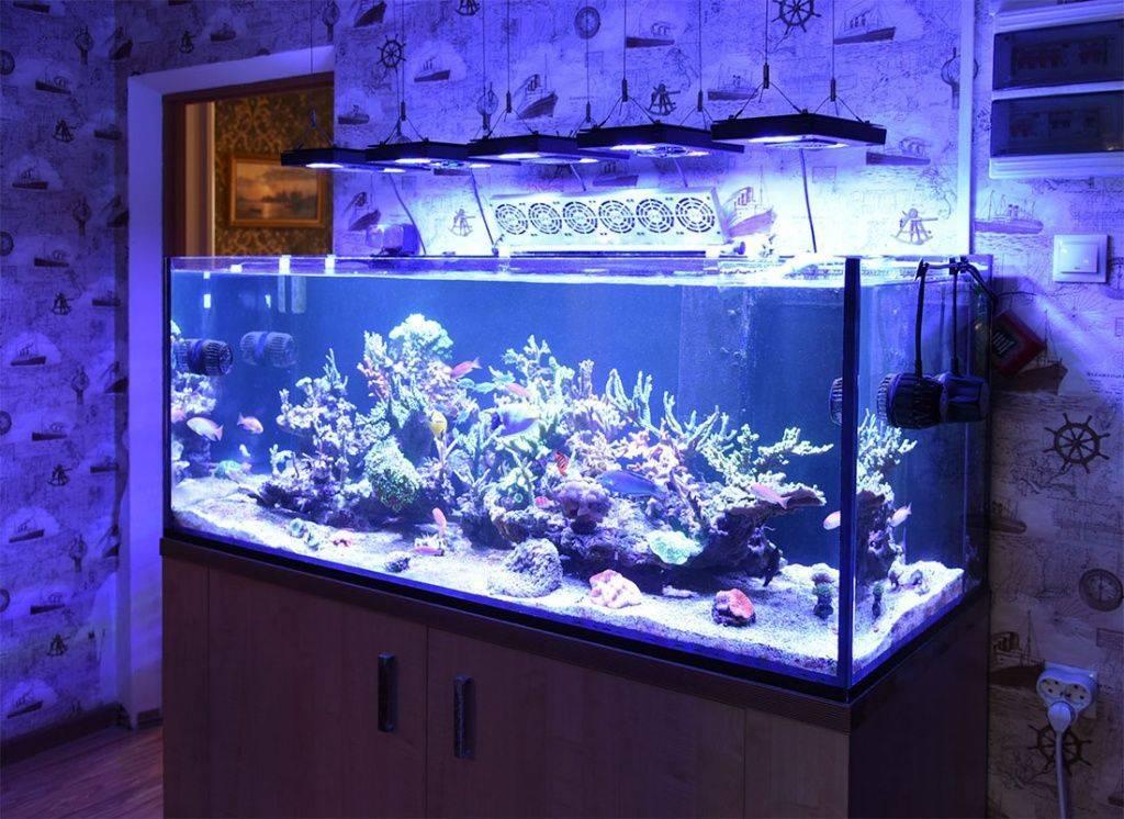 Корм для аквариумных рыбок и правильное питание.