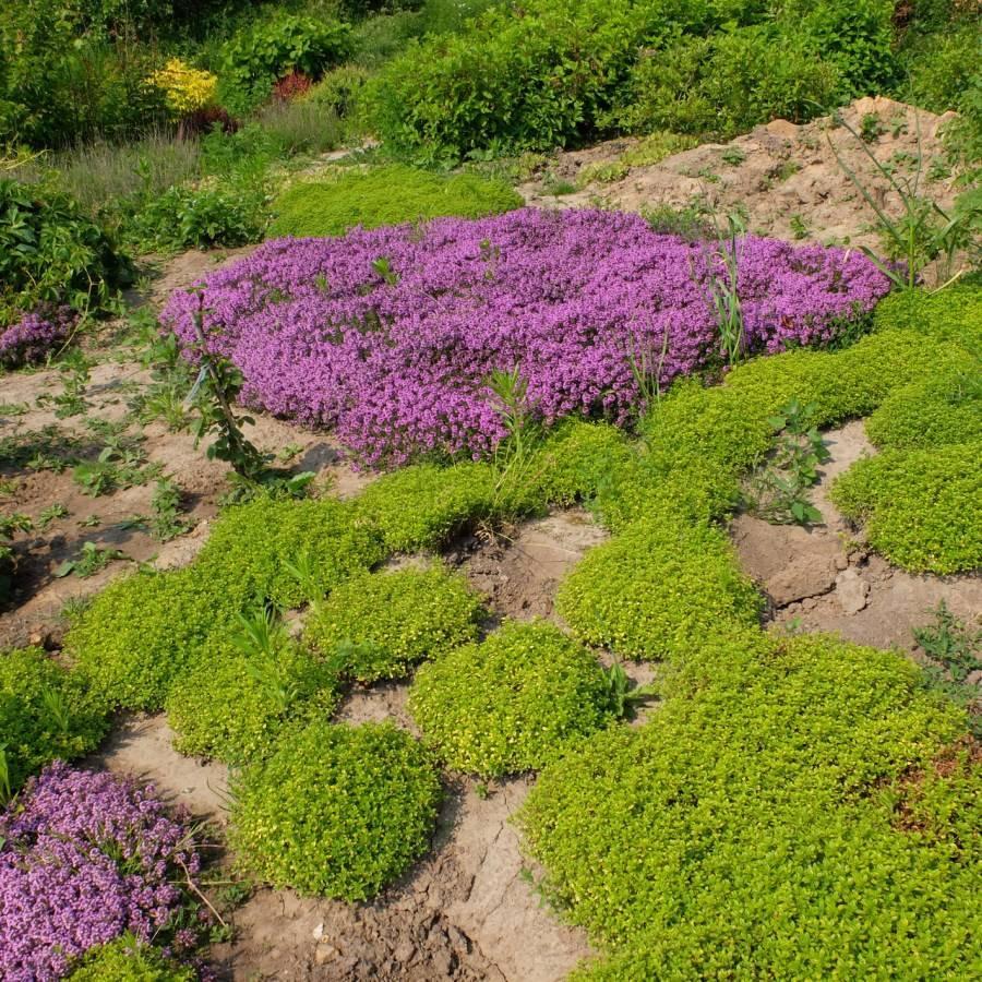 Декоративная трава — выбор растений для разных стилей. обзор идей для начинающих и советы профессионалам (135 фото и видео)