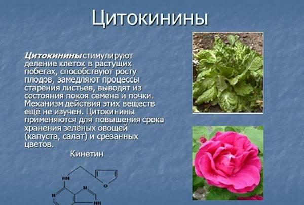 Стимуляторы роста растений: применение, виды, характеристика