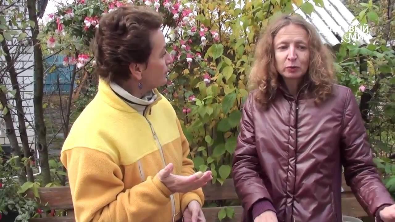 Размножение фуксии черенками в домашних условиях: советы и рекомендации