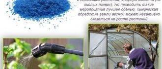 Черенкование ивы осенью – размножение ивы черенками, выращивание и уход за саженцем | дача