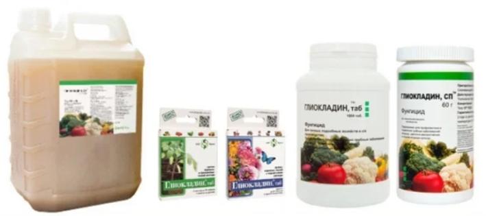Глиокладин – биопрепарат для профилактики и борьбы с грибковыми заболеваниями