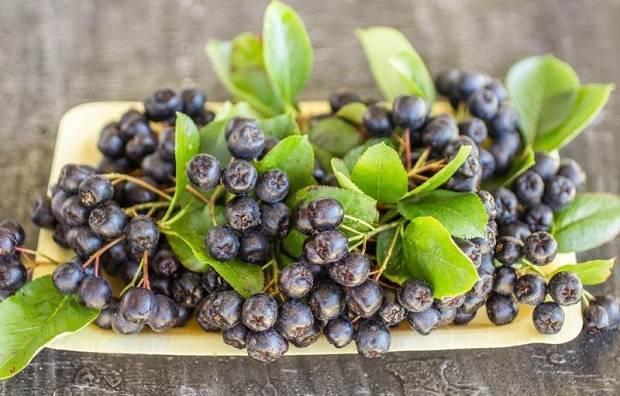 Полезные свойства черноплодной рябины, простые рецепты