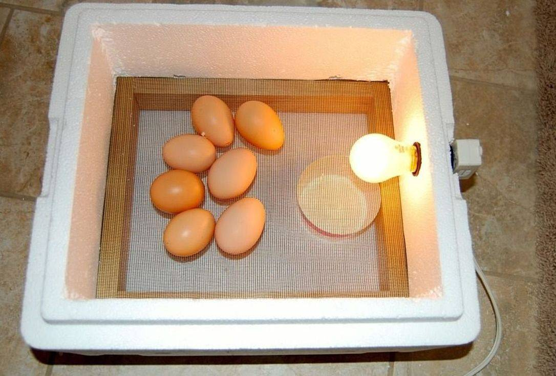 Самодельный инкубатор для яиц — инструкция