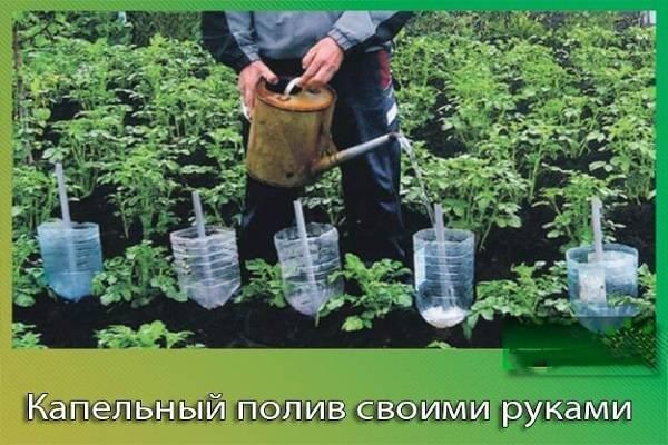 Как организовать полив в теплице из пластиковых бутылок или канистр