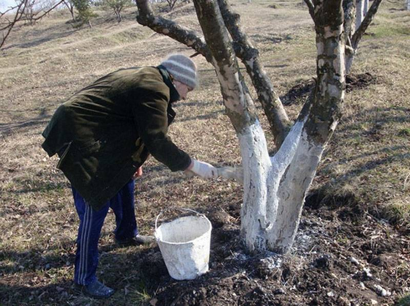 Железный купорос – применение в саду