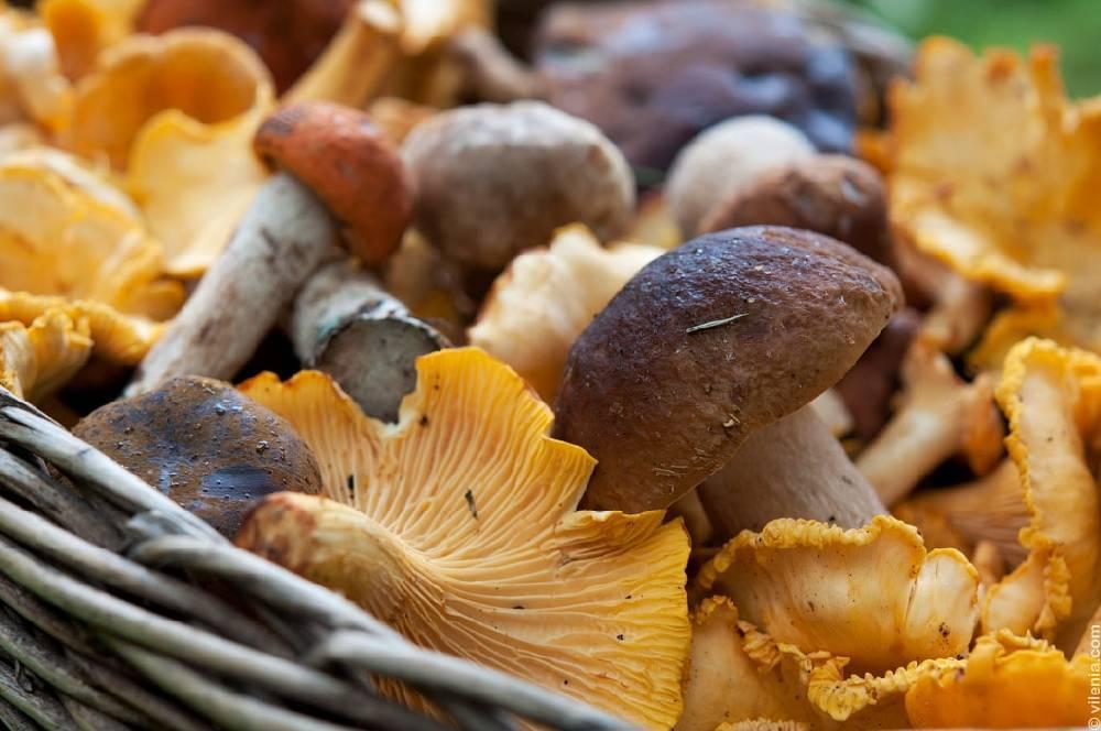 Как приготовить белые грибы