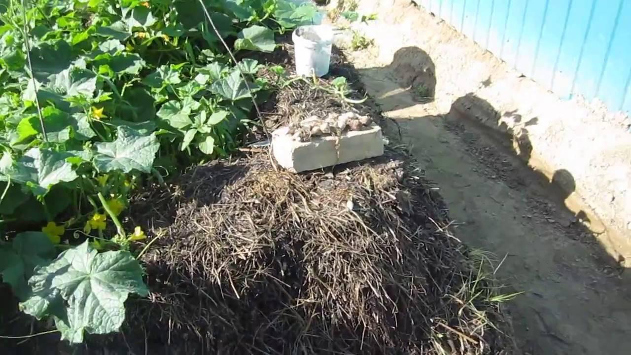 Внесение жидкого навоза в почву – преимущества и недостатки метода