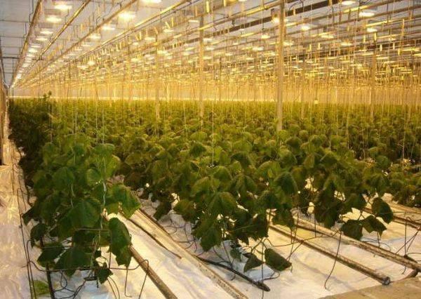 Как самостоятельно сделать гидропонику для огурцов и томатов в домашних условиях?
