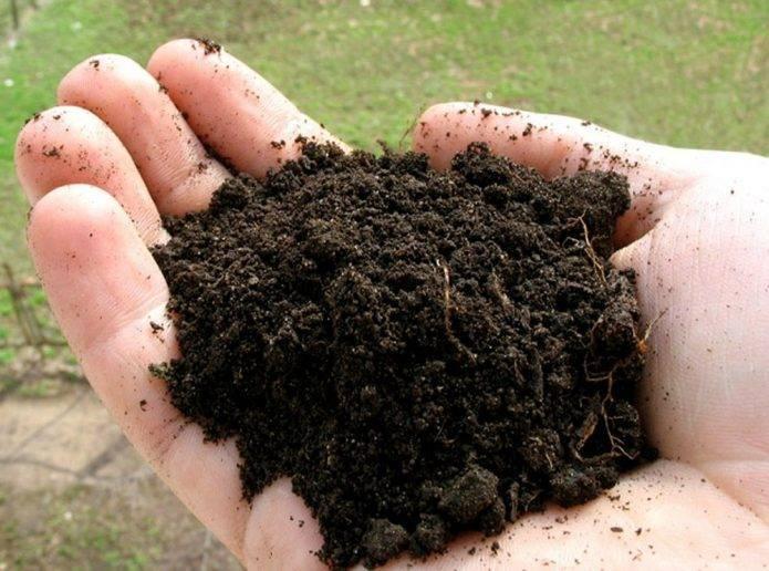 Как размножить калину?