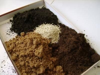 Как приготовить грунт для рассады перцев
