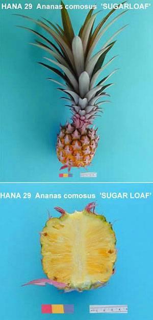 Ананас — король экзотических фруктов