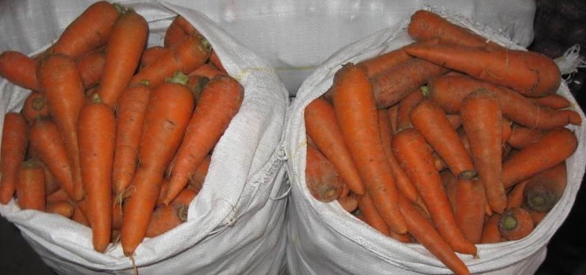 Проверенные способы, как сохранить морковь на зиму в земле