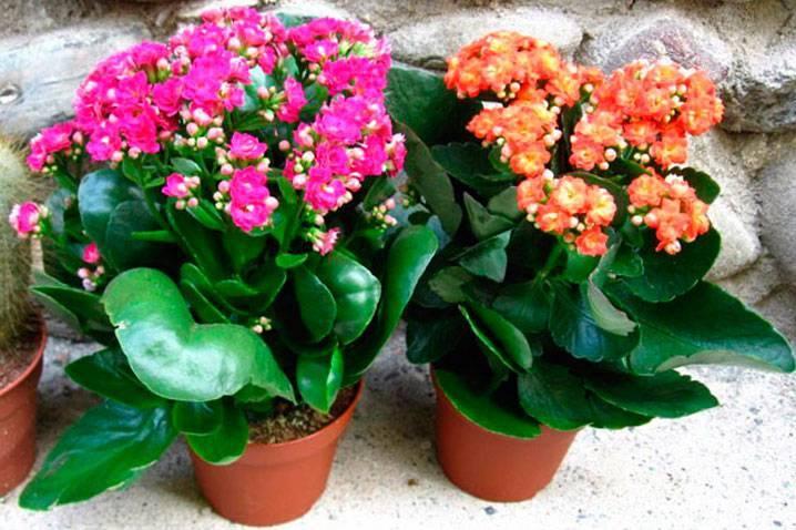 Топ-5 растений для украшения детской комнаты