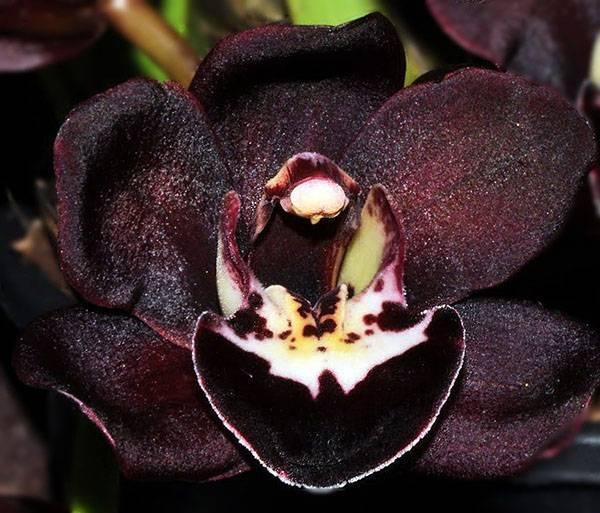 Болезни орхидей: их фото, лечение и профилактика