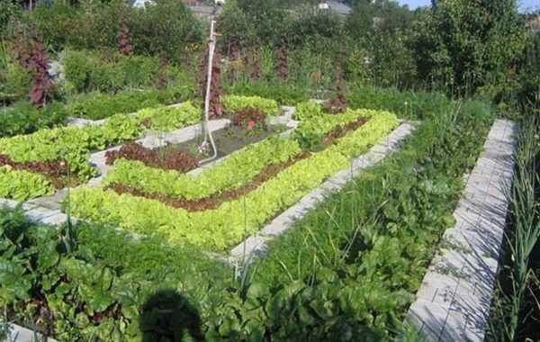 Умный огород, который рекомендует дачникам игорь лядов: преимущества методики, сооружение грядок