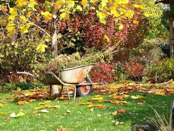 Что делать в сентябре – 30 самых важных дел в саду, огороде и цветнике