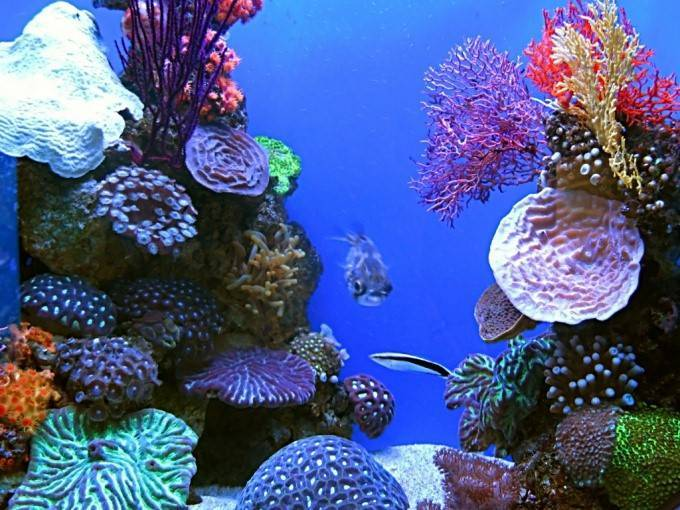 Особенности растительной пищи для рыбок