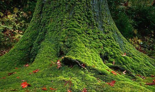 Дачный участок превращается… превращается… в пищевой лесосад!