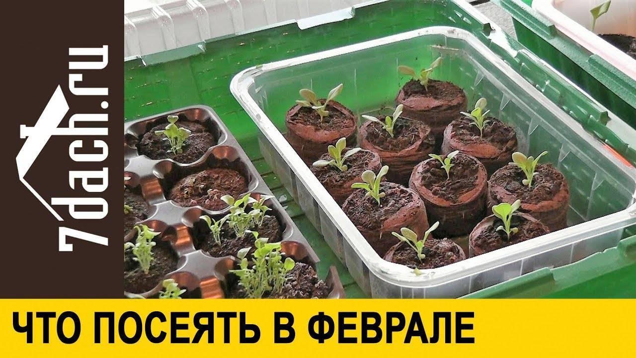 Какую рассаду сажают в феврале на урале. какую рассаду сажают в феврале? рассаду каких овощей сажают в феврале