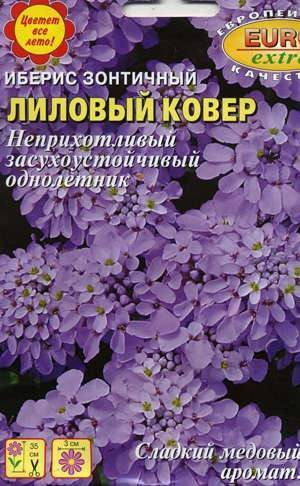 Цветочный ковер для дачи — элегантные виды ибериса