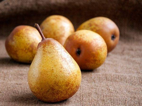 Вкус этих плодов не оставит вас равнодушным — груша татьяна