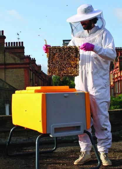 Эффективные методы обработки пчел от клеща
