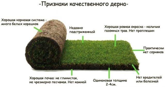 Газонная трава лилипут: лучший выбор для прекрасной лужайки