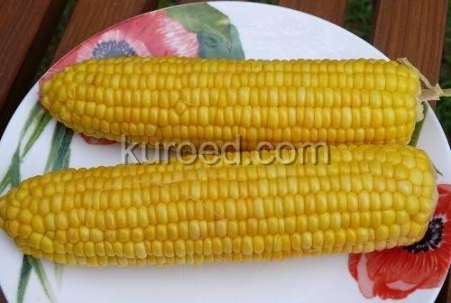 Как правильно хранить кукурузу, чтобы наслаждаться полезным и вкусным злаком всю зиму