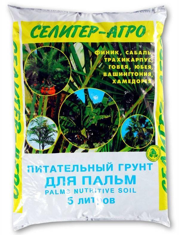 Как вырастить у себя дома веерную пальму вашингтонию?