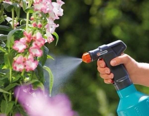 Применение зеленого мыла как метод борьбы с вредителями