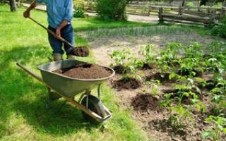 Торф использование в огороде. изготовление плодородной смеси с использованием торфа
