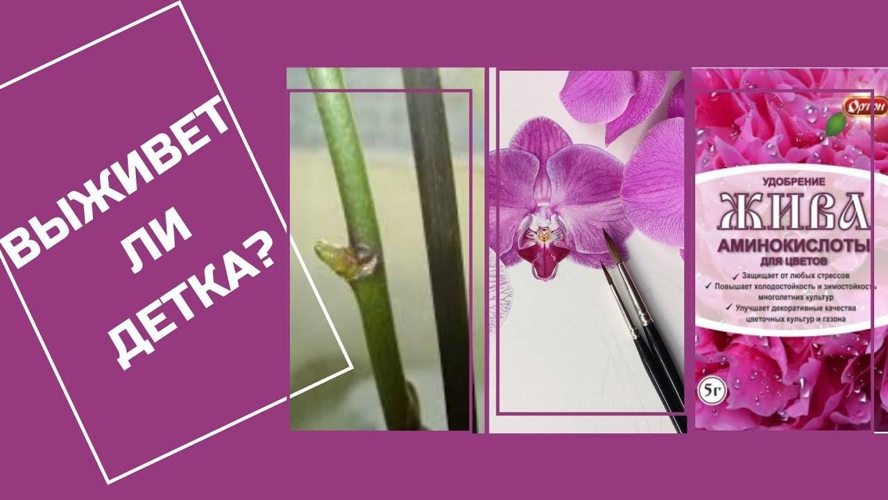 Советы специалистов, чем подкармливать орхидею, чтобы она зацвела