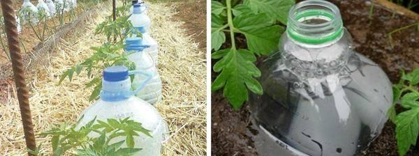 Способы применения пластиковых бутылок на современной даче