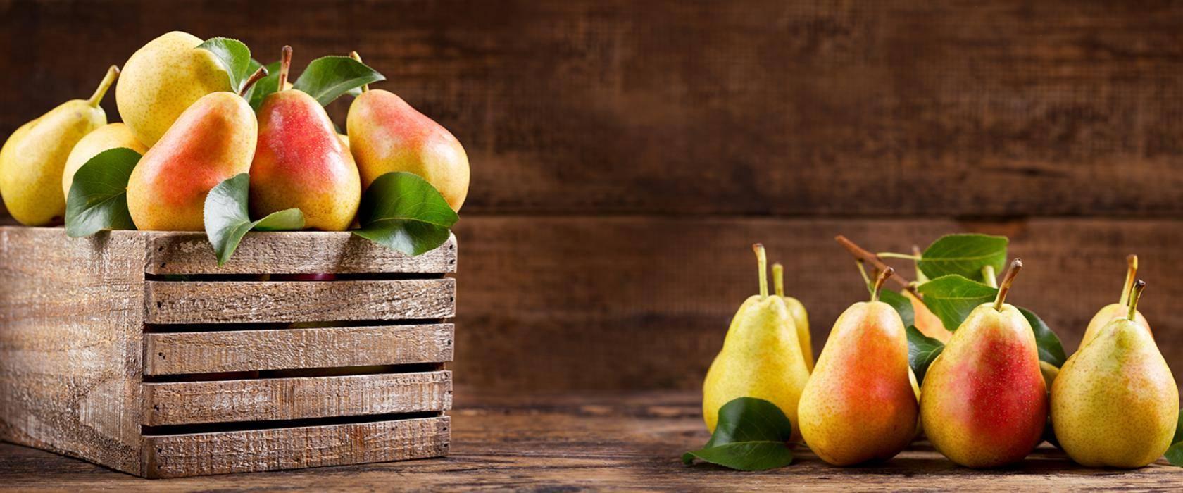 Польза и вред для здоровья ароматных груш
