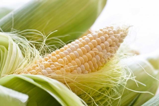 Посадка кукурузы в открытый грунт в подмосковье