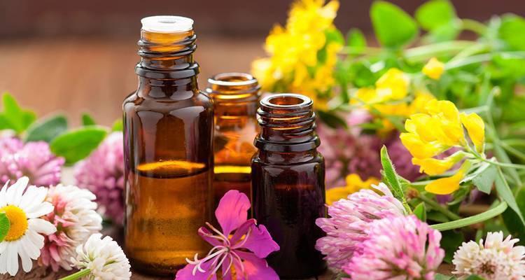 Вербена чай – полезные свойства и применение лекарственной травы