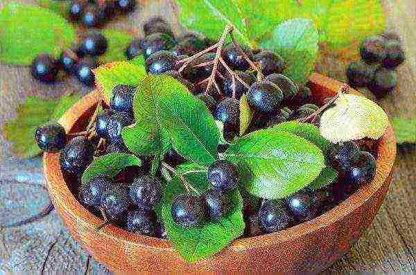 Лучшие кустарники для сада: обзор лиственных видов, 35 фото
