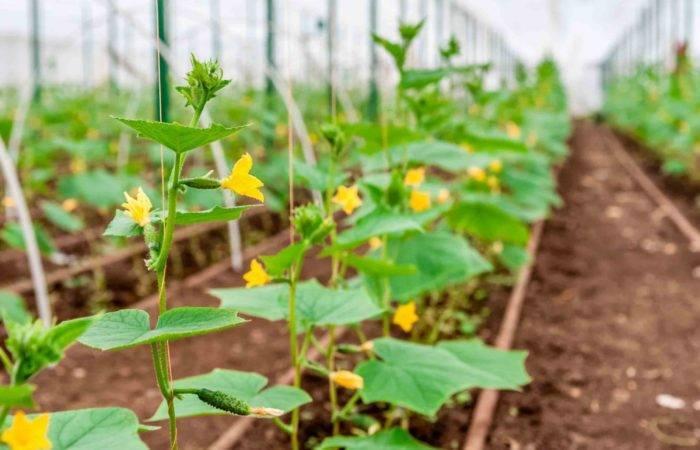 Запахло весной или мартовские хлопоты дачника в саду