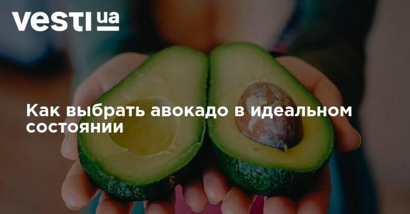 Как выбрать спелый и вкусный авокадо в магазине