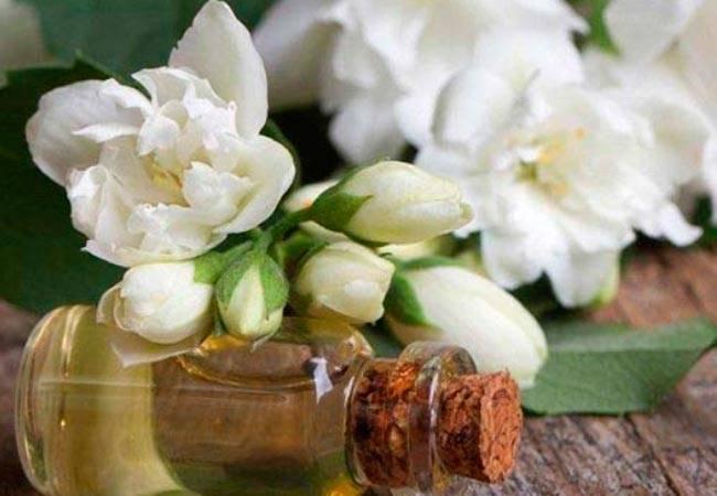 Эфирное масло жасмина: характеристика, полезные свойства, применение в косметологии