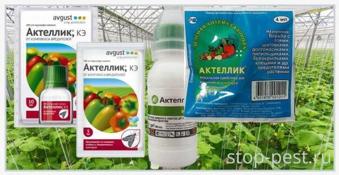 Препарат «актеллик» для комнатных растений: аналоги, отзывы, инструкция по применению