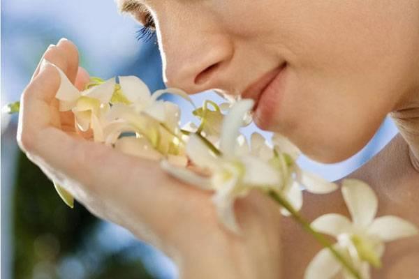 Эфирное масло жасмина – 5 способов применения в домашних условиях